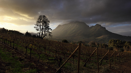 africa trees light sunset storm mountains clouds paul vineyard vines pix cloudy farm south stormy farmland vineyards western cape psk stellenbosch farmlands knipe pskpix