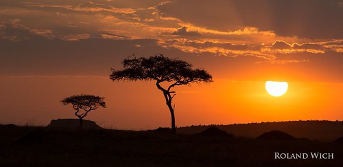 africa sunset kenya safari mara afrika kenia masai
