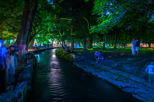 fireflies (Kamigamo-shrine, Kyoto)