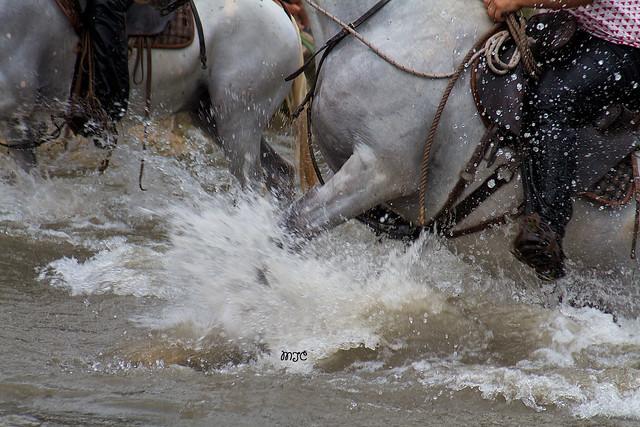 Détails lors de la traversée des chevaux..... Details while crossing horses .....
