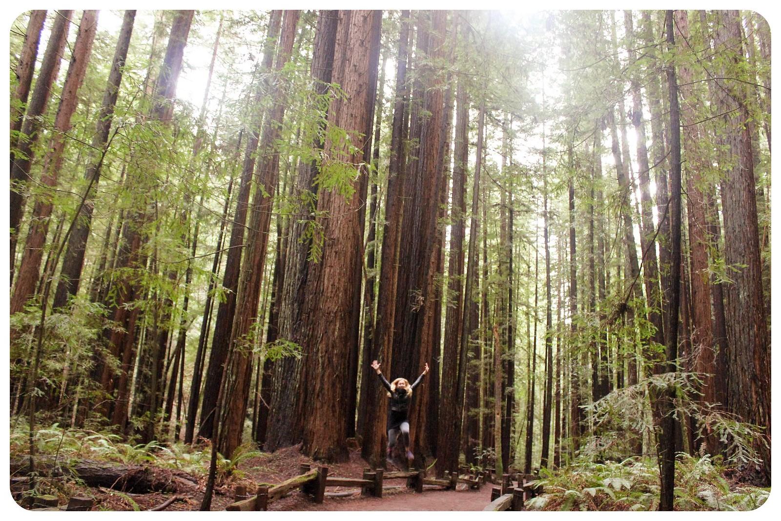 armstrong redwoods dani jump