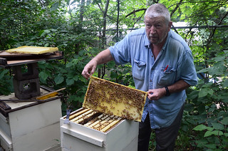 Local Beekeepers React to Plan to Save Bees, Other Pollinators | by KOMUnews