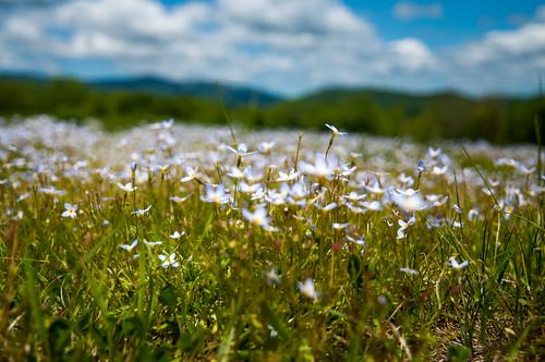 flowers sky aperture vermont statecampgroundgreenmounains