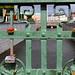 Sur le pont joignant le centre-ville à Gamla, des amoureux cadenassent leur idylle sur les barreaux de fer.