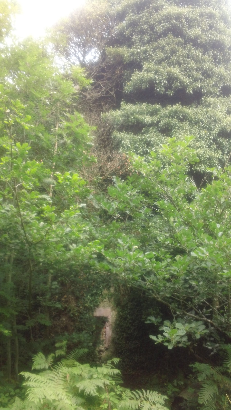 Folly... ..as tall as the greenery?