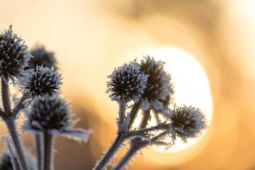 winter orange sun ice wisconsin sunrise fire frozen frost newrichmond