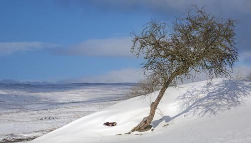 uk shadow sky cloud mountain snow tree field wales canon landscape eos countryside bush britain hill cymru cardiff breconbeacons explore caerdydd 5d agriculture brecon hillside thorn canoneos5d explored wentloog stevegarrington