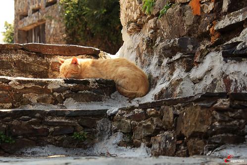portugal cat peace sleep paz calm gato siesta dormir calma coimbra gatinho lousã sossego talasnal serradelousã