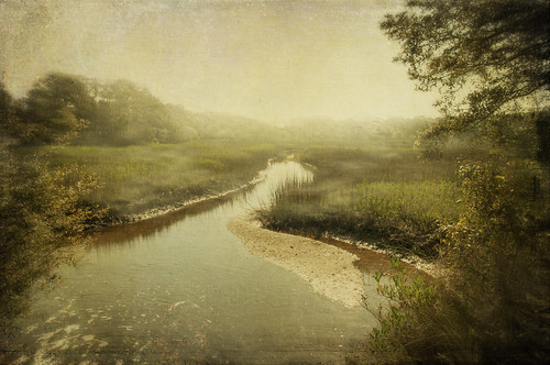 trees misty fog creek landscape marsh textured