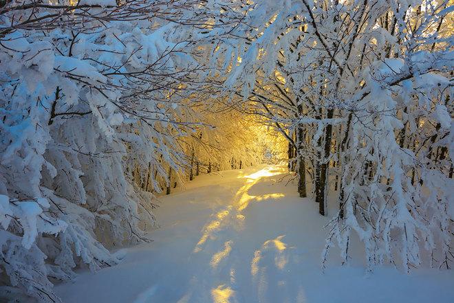 Bình minh trên con đường phủ đầy tuyết trắng ở công viên quốc gia Campigna, Italy.