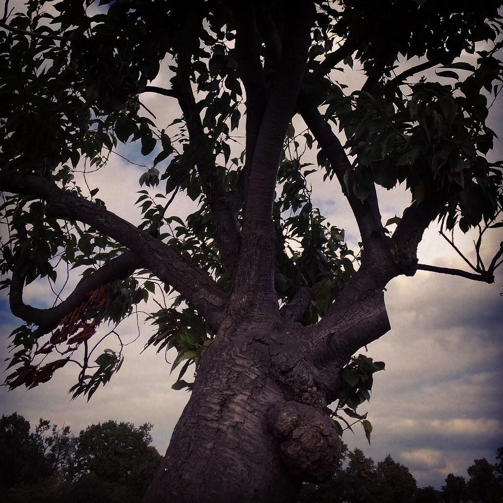 unbowed tree