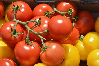 Red & Yellow Tomatoes | by Scott 97006
