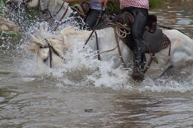 Détails lors de la traversée des chevaux.....