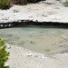 NPBNN013 (unnamed pool 10 meters NNE of Whale's Mouth Spring) (Porcelain Basin, Norris Geyser Basin, Yellowstone Hotspot Volcano, nw Wyoming, USA)