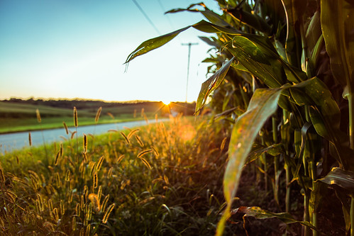 sun nature corn unitedstates pennsylvania farm coalcenter