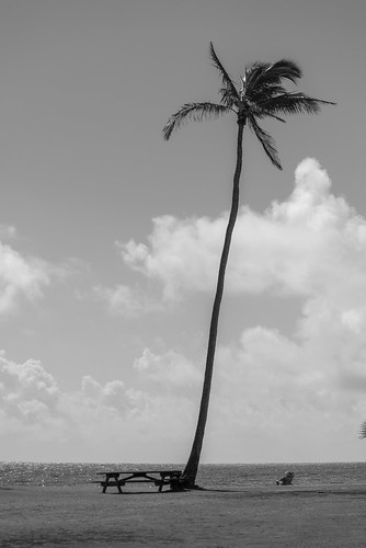 80400mmf4556dvr afvrzoomnikkor80400mmf4556ded america arena bw beach black blackwhite blackandwhite blancoynegro bãibiển coast coastal cobblestones color d610 eeuu estadosunidos fullframe grava gravel greenplants hawaii island kauai kauaʻi kingdomplantae landform lens mar mare mer monochrome nature nikkor nikkor80400mm nikkor80400mmf4556dafvred nikkorlens nikon nikond610 noiretblanc northamerica ocean oceansea oceanea oceano outdoor pacific pacificocean palm palmtree palmtrees pebbles plage plantae playa plaża poipubeach poipubeachpark polynesia 自然 黑白 해변 砂浜 米国 美国 灘 白黒 白黒写真 植物 椰子 海 海岸