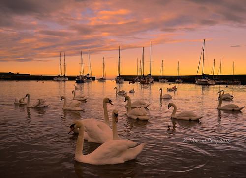 county ireland sunset sky water birds clouds boats photography seaside nikon harbour vincent swans yachts wicklow bray coey d5100