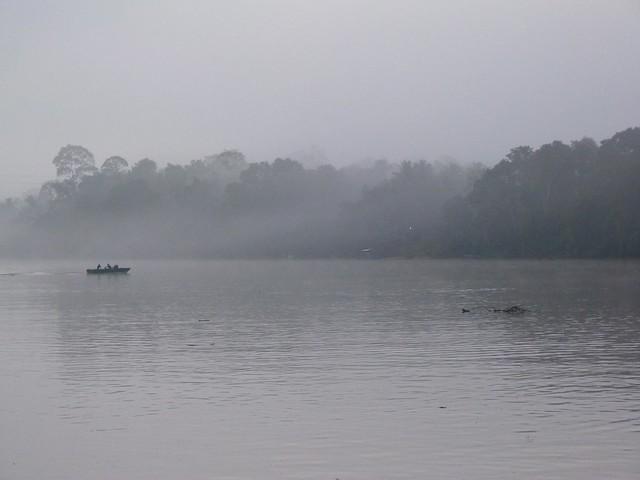 Niebla en el río Kinabatangan (Borneo, Malasia)