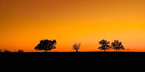 sunset tree silhouette virginia meadows shenandoahnationalpark sonyslt