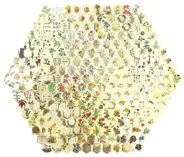 251 Random Flowers Arranged by Similarity