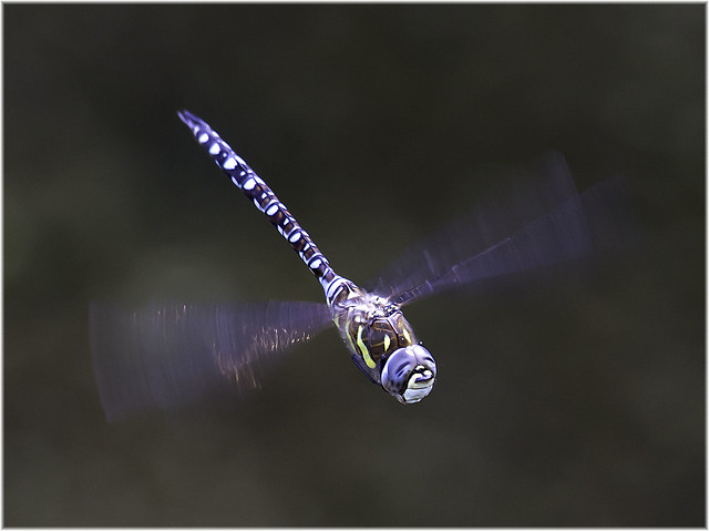 Migrant hawker