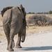 Africa—wildlife & people