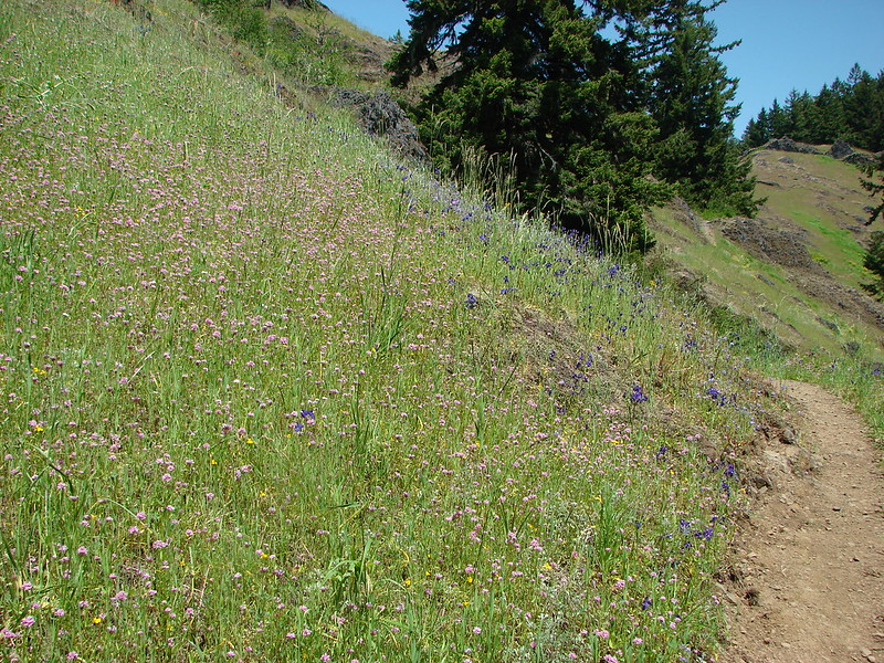 Wildflowers along the Tire Mountain Trail