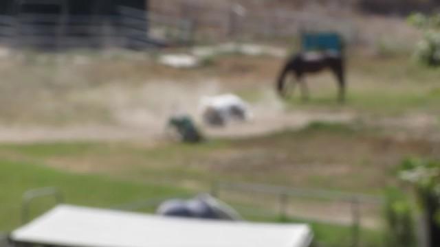 MVI_3444 Isla Vista horse dust bath rolling
