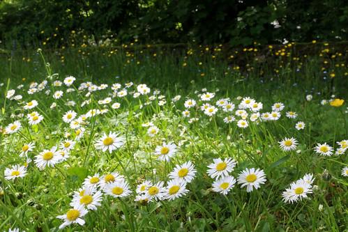 Flowers in the Garden | by Mini D