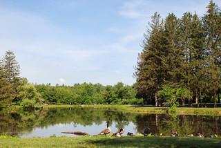 Benson's Park - Hudson NH