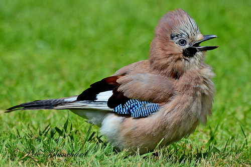 Jay | by PETEJLB