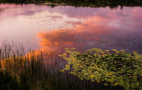 sunset summer england lake water clouds reflections reeds prime kent nikon lillies maidstone d7100 35f18 lightroom55
