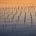 Mozuku seaweed poles at sunrise ,Yomitan-Okinawa by Okinawa Nature Photography
