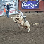 2014 Ellensburg Rodeo (Saturday Round)
