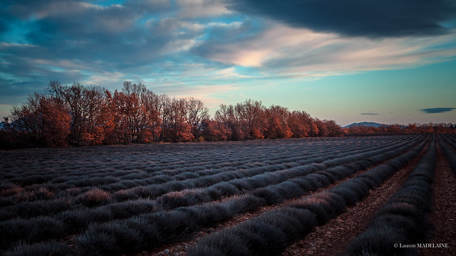 Lavender Fields of Provence Valensole