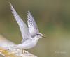 Graceful Takeoff by Rick Derevan