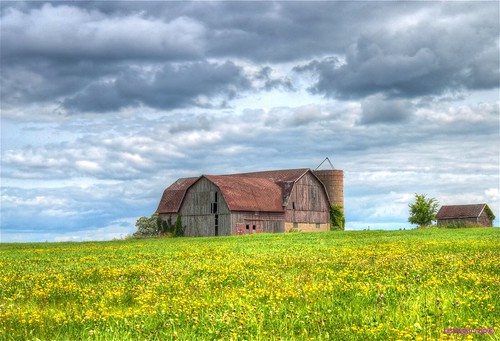 Carson, WI. Barn with flowering field | by newagecrap