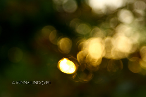 sunset summer usa sunlight abstract green nature yellow canon evening aperture crystal bokeh parks bridges arkansas glimmer 60d