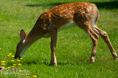 Oh Deer-7022