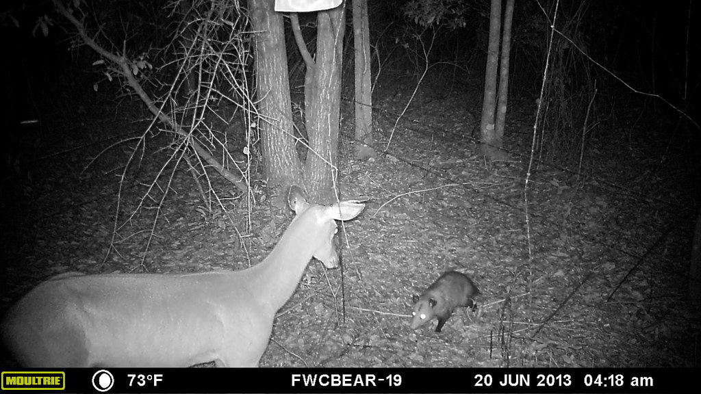 Best Trail Camera For Hunting