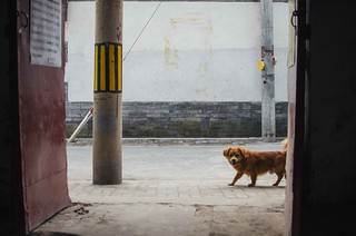 70/365: Curious Dog | by H_H_Photography