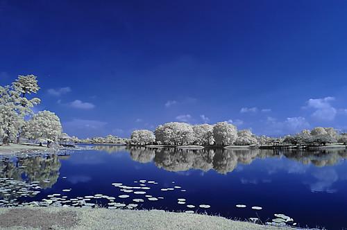 blue trees white lake reflection nature water landscape island infrared cyberjaya inframerah