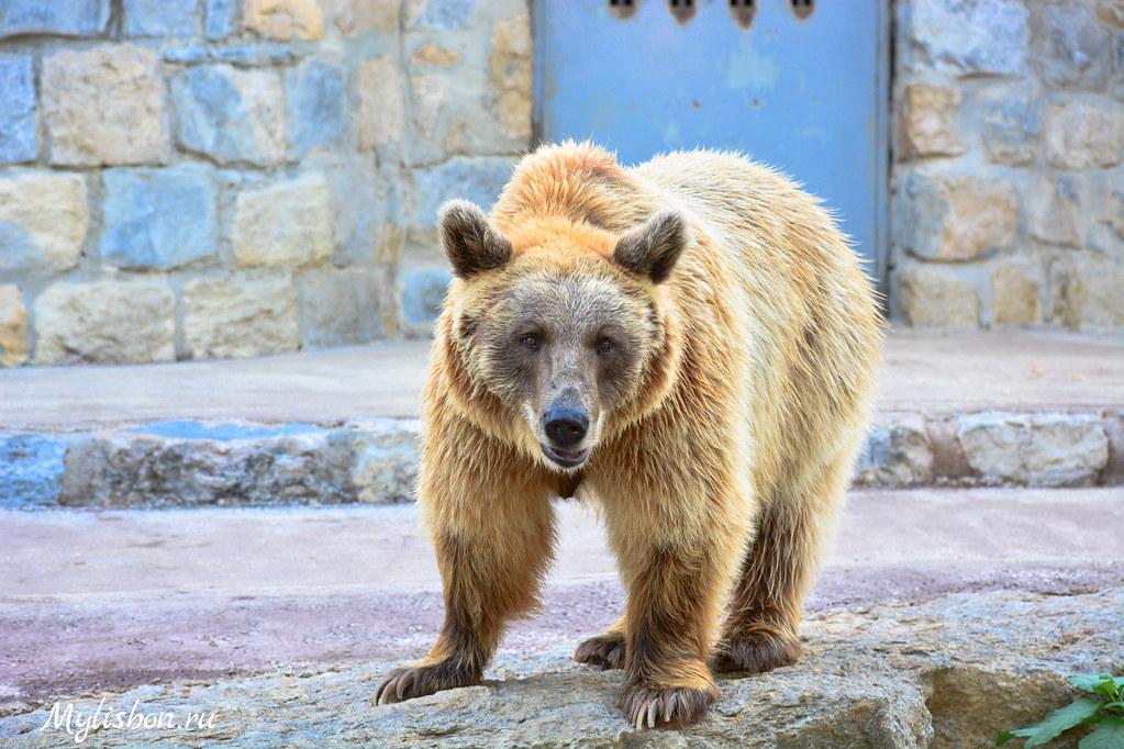 Zoo in Lisbon (Jardim Zoológico) | Setembro 2014 | Pavel Arzhakov | Flickr