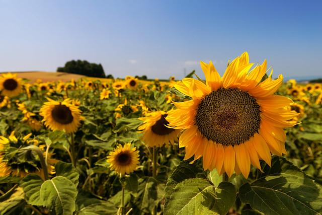 Life full of sun!