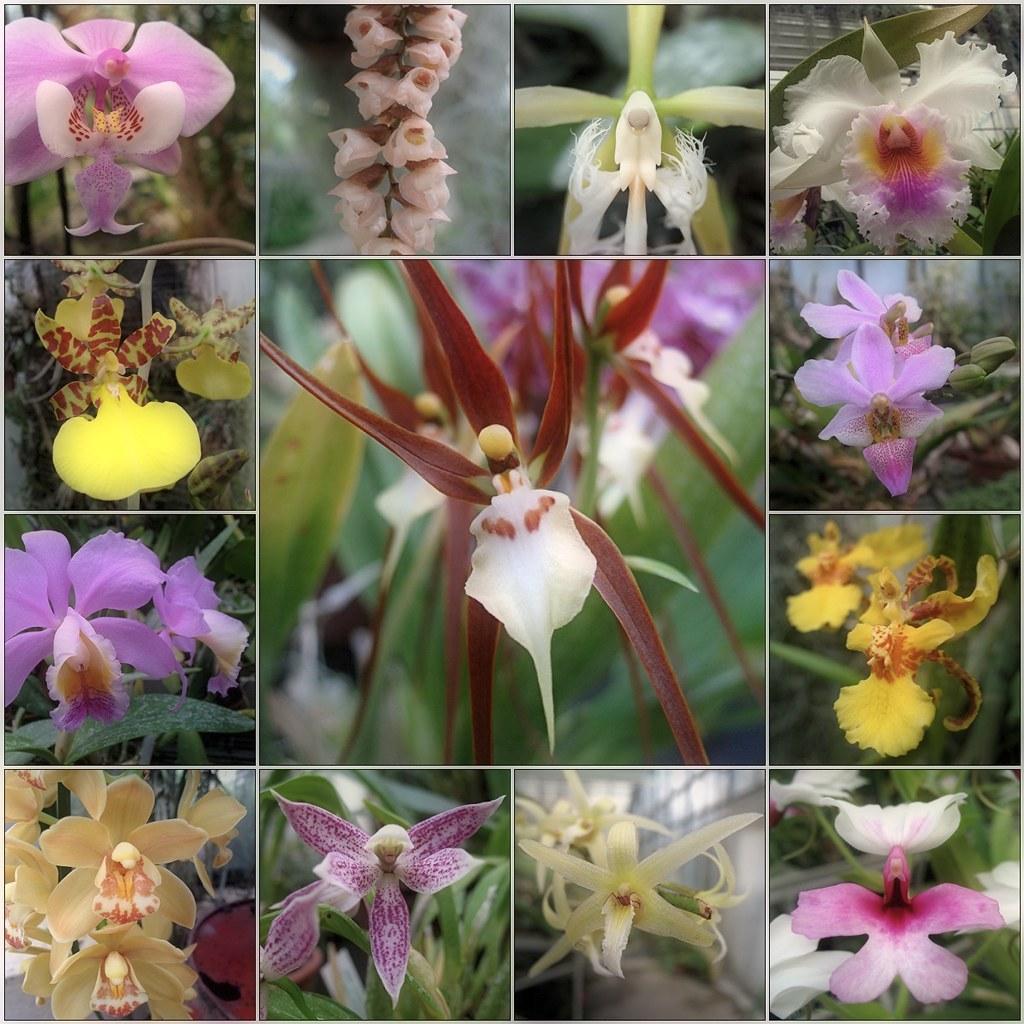 December Orchids