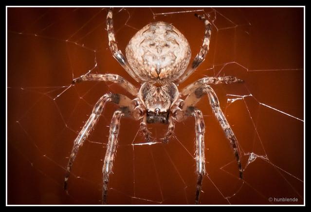 Spider_3