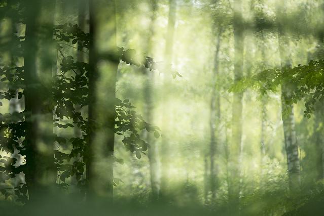 summerforest