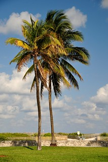 Palm Trees | by faungg's photos