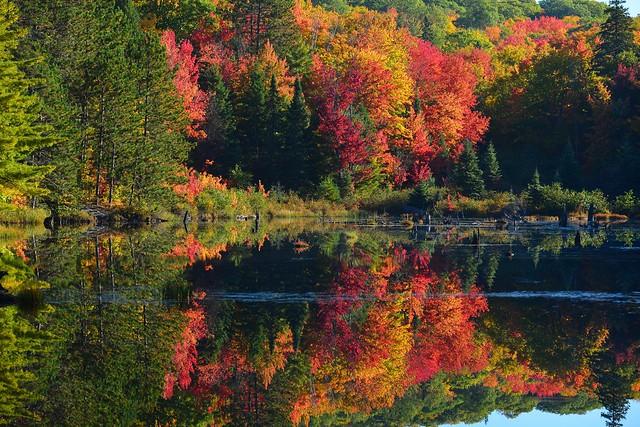 Peak of autumn colour at the Centennial Ridges Trail, Algonquin Park, Ontario, Canada