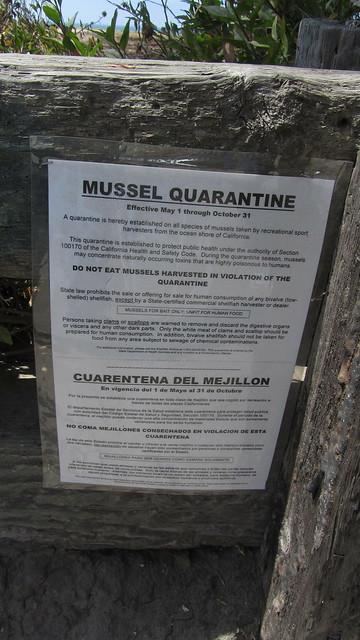 IMG_0575 mussel quarantine